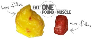 how_it_works_muscle_fat1 (1)
