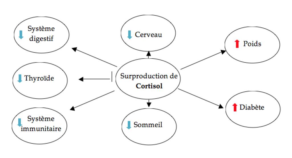 surproduction-de-cortisol